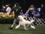 Competition Dogs and Dog Grooming