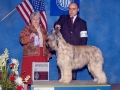 Carly, Champion Briard Show Coat