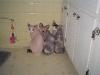 Jill's Cats