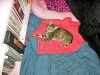 Abbie as a Kitten