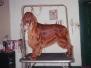 Pet Grooming Portfolio