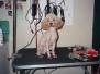 Pro Bono Shelter Dog Grooming