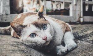 Cats portfolio, Dog Stylists